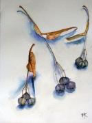 Lindblomsfrön